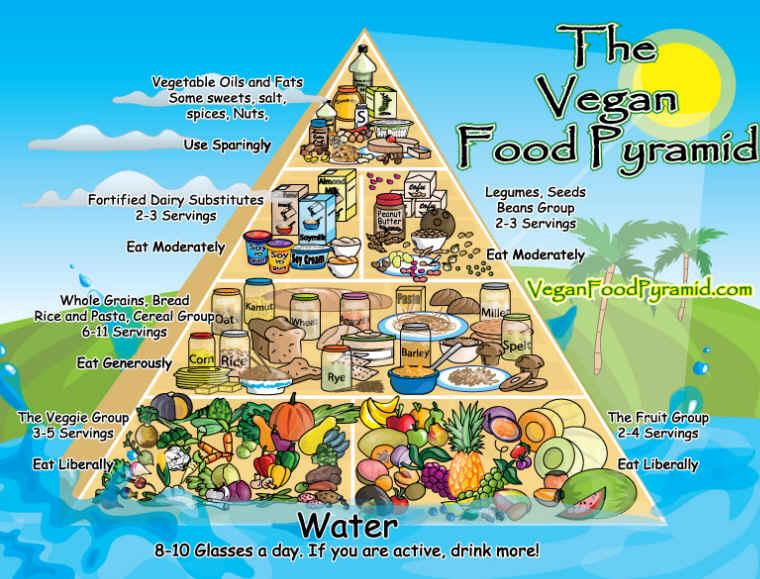http://vege.com.pl/wp-content/uploads/2011/11/Vegan-Food-Pyramid-II.jpg