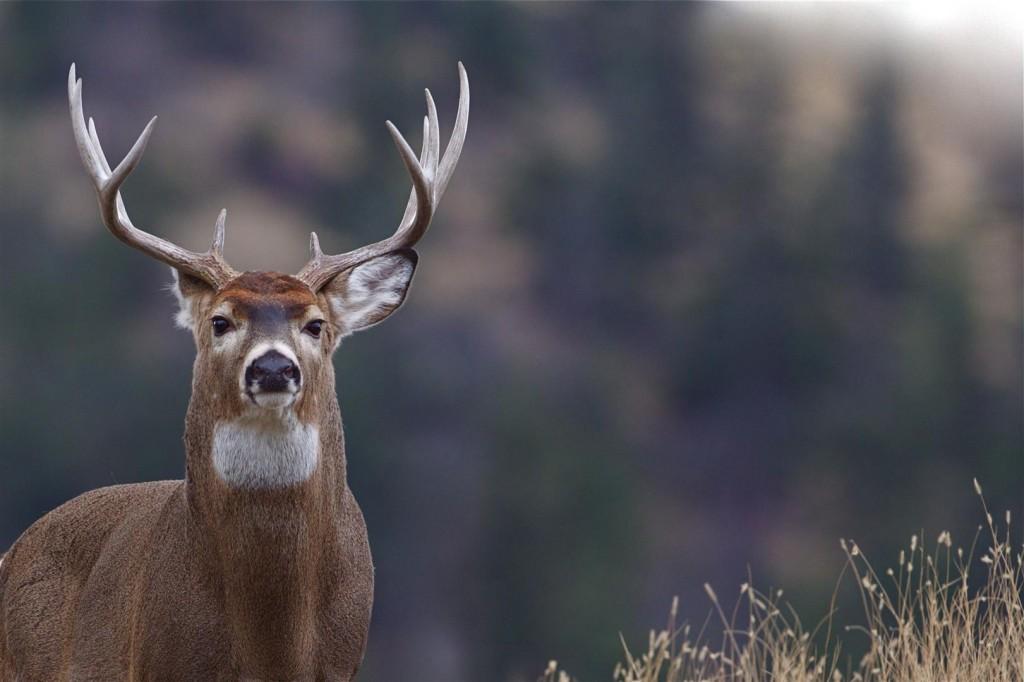 polowanie (1)