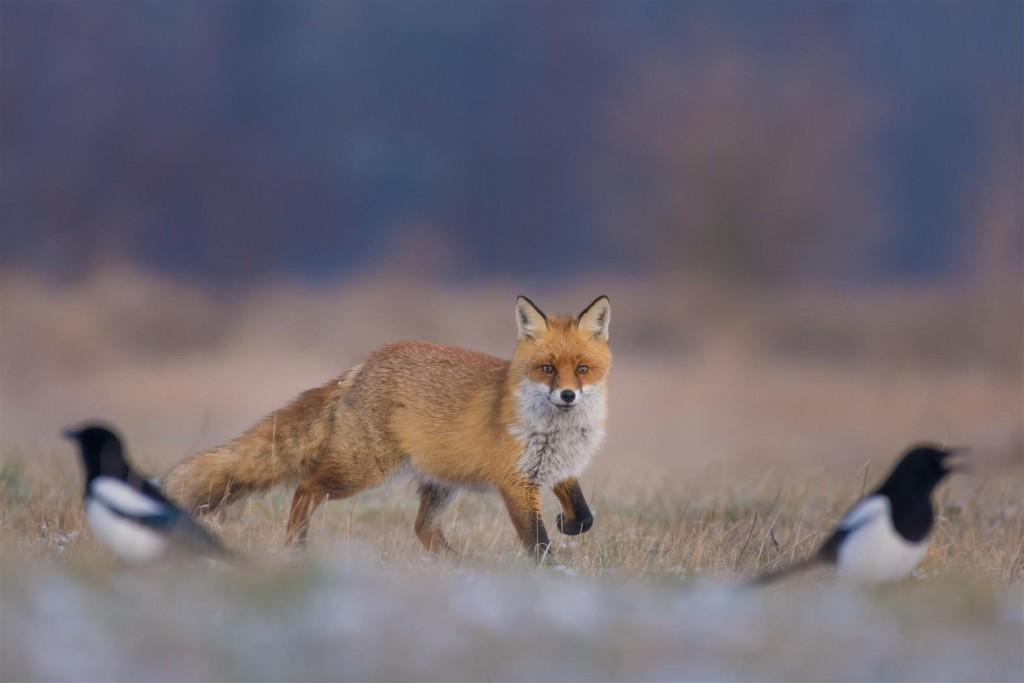 polowanie (5)