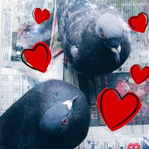 Felicjan i Gryzelda, zakochana para