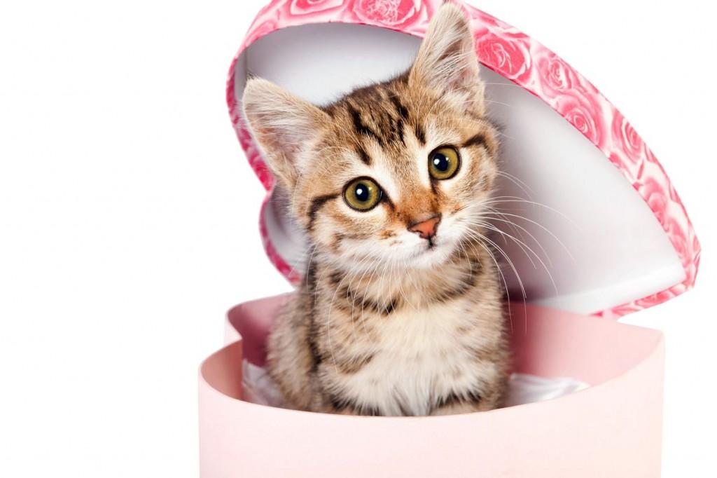 cat_gift1
