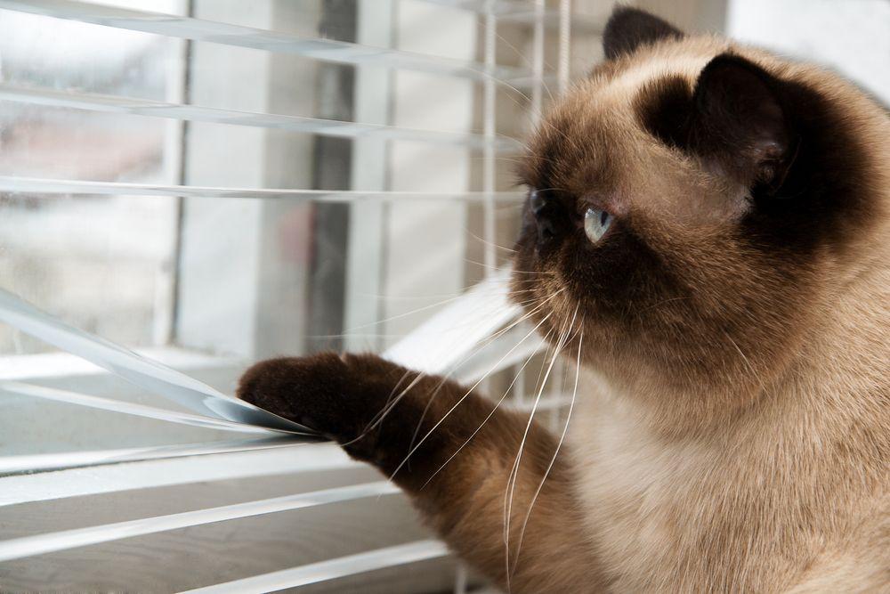 kot_okno