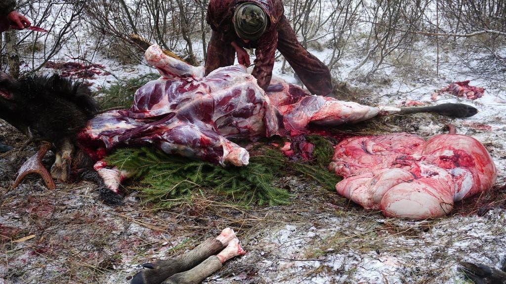 polowanie (9)