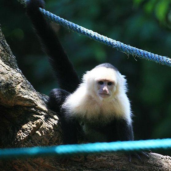 "EgzooVet dla ""Vege"": małpka w domu? Serio?!"