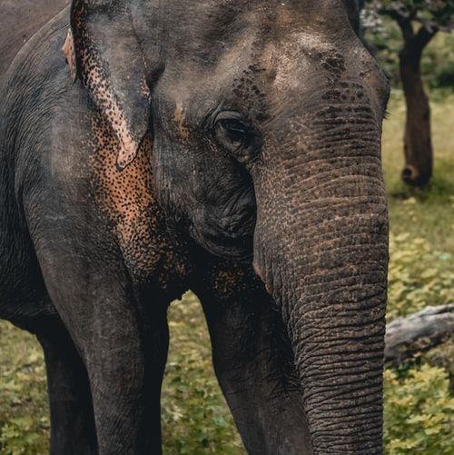 Dobra zmiana w Kambodży: zakaże turystom jazdy na słoniach