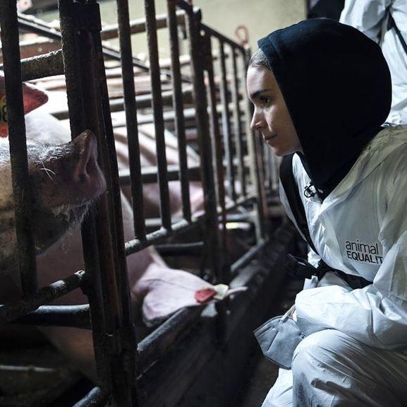 Aktorka Rooney Mara obnaża horror hodowli przemysłowych