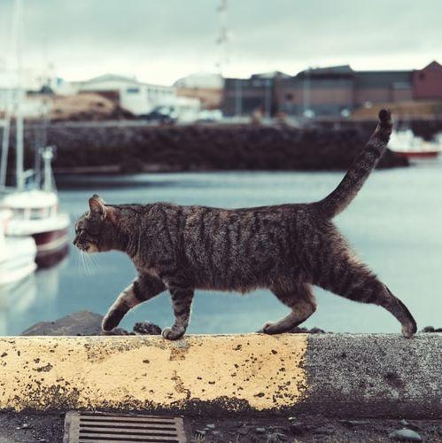 Holandia: wypuszczasz kota wolno? Łamiesz prawo!