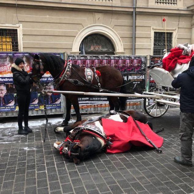 Pierwsze w historii zarzuty za znęcanie się koniem dorożkarskim w Krakowie