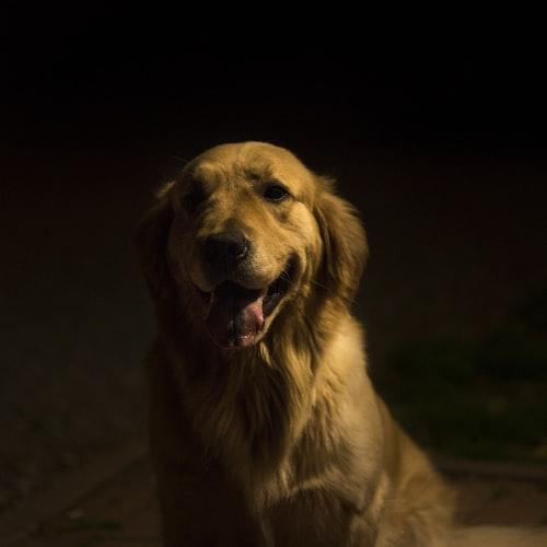 Virginia: honorowy doktorat dla psiego terapeuty
