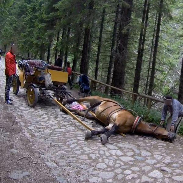 Kolejny wypadek konia w Tatrach