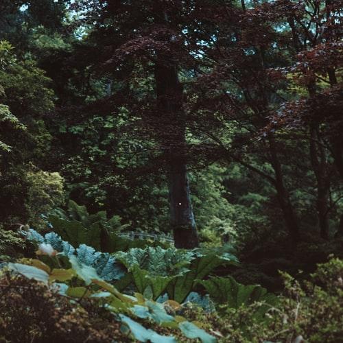 W lesie nie ma kranów