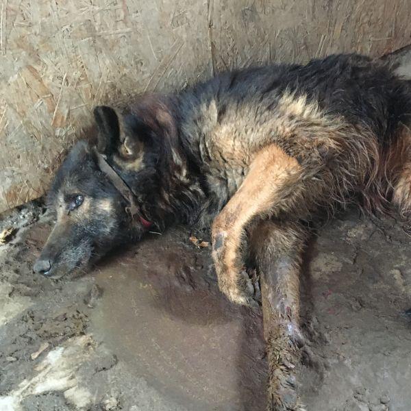 Czy państwo poradzi sobie z ratowaniem zwierząt?
