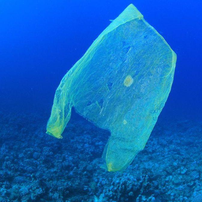 Raport: plastik zabija morskie zwierzęta!