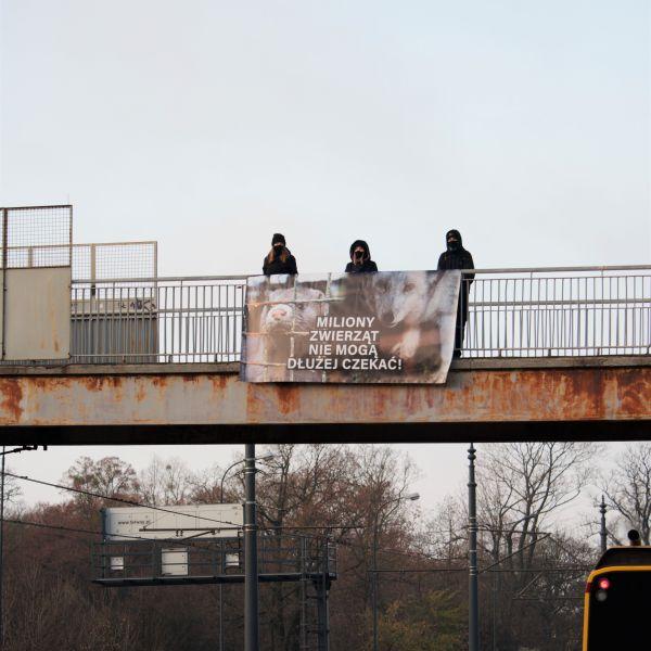 Aktywiści przypominają politykom o Piątce dla zwierząt