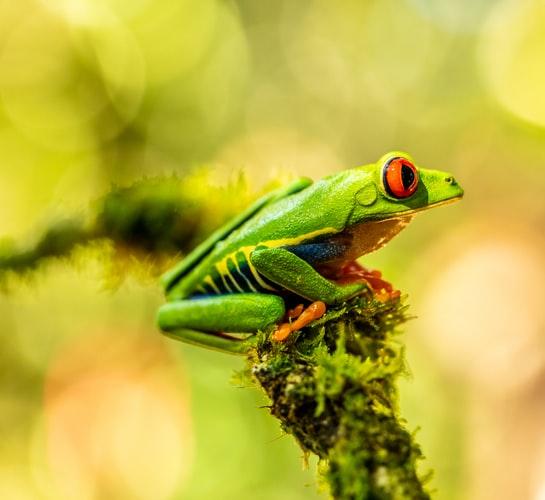 Nowo odkryta żaba. Nazwano ją na cześć zespołu!