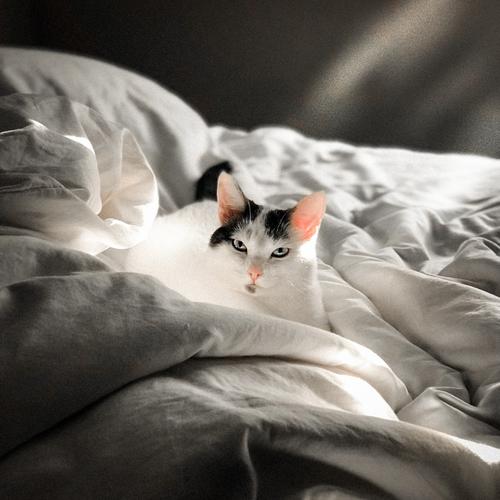 Spanie ze zwierzętami poprawia jakość snu! Nowe badania