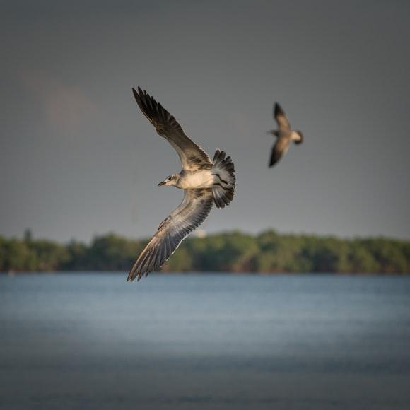 Birdlife: co 5. gatunek ptaków w Europie zagrożony